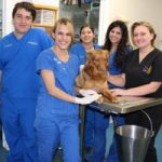Hernando High School Vet Assisting Program